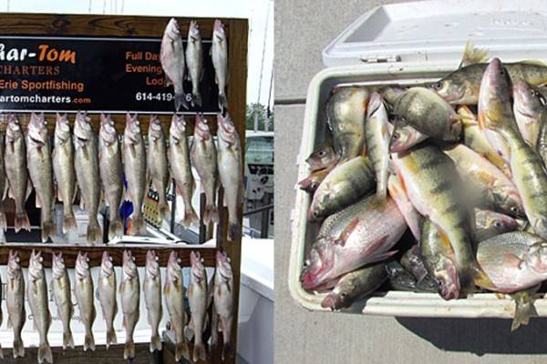 chartom fishing